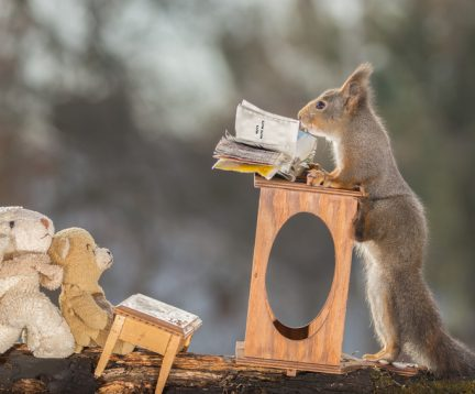 red squirrel reading a book with the text nuts and bear and sheep are watching